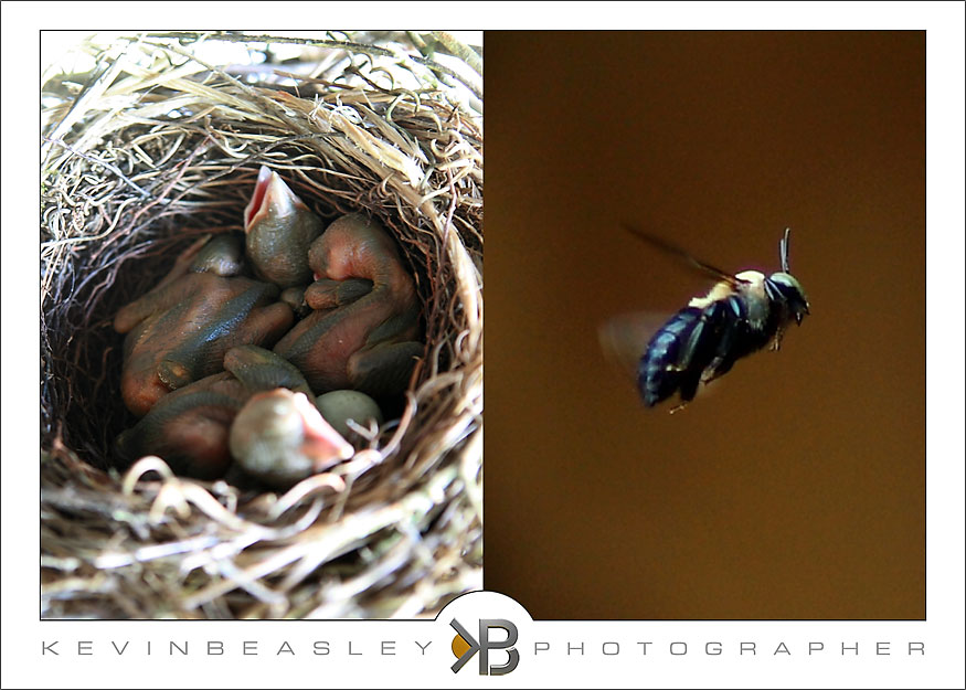 Baby Blue Jay Bird Try shooting baby blue jays